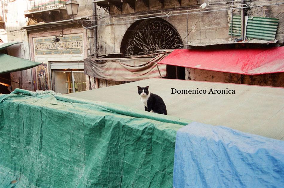 Foto Domenico Aronica-Palermo (37)